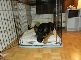 crate training how to train a german shepherd detailed guide with videos