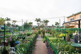 wollongong botanic gardens items in leisure coast garden centre store on ebay