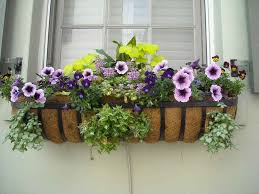 indoor plants to make your house fresher theydesign net