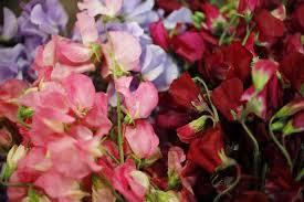 florist san antonio calvin finch cutting flowers for the landscape san antonio
