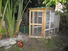 backyard chickens modern pioneer mom