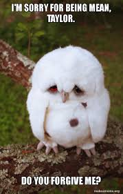 Memes About Being Sorry - i m sorry for being mean taylor do you forgive me sad owl