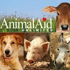 animal aid unlimited india youtube