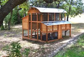 Backyard Chicken Farming by Triyae Com U003d Best Urban Backyard Chickens Various Design