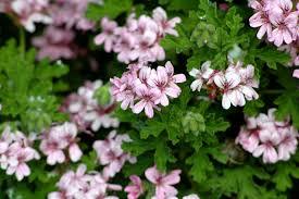 herbe cuisine plantes aromatiques cuisine et herbes faciles à cultiver inspirez