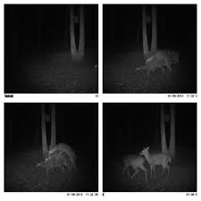 Threesome Memes - my buddy has a deer cam on his property and it captured this pics
