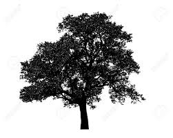 lonely black tree graphic isolated on white background stock photo