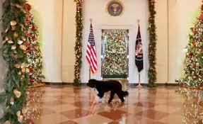 White House Christmas Decorations Photos by Jennifer Pickens White House Wednesdays Blog