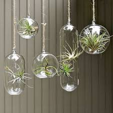 hanging air plant inspiration hang air plants in glass bubbles air plants plants