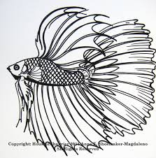 betta fish u2013 home and furnitures