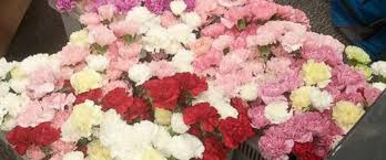 buy roses buy roses for valentines day ht valentines flowers 02 jef 160212
