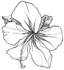 easy flower pictures to draw laura williams