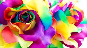 multicolor roses multicolor roses petals flowers closeup 3840x2160