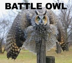 Funny Owl Meme - the battle owl viral viral videos