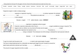 photosynthesis and respiration comprehension worksheet by
