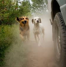how to get dog to stop barking why dogs chase cars how to stop puppies chasing cars
