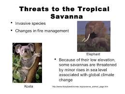 Tropical Savanna Dominant Plants - powerpoint biomes