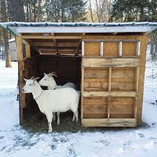 how to make a house cozy learn how to build a goat shelter diy goat shelter mother