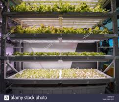 Hydroponics Vegetable Gardening by Organic Hydroponic Vegetable Garden Stock Photo Royalty Free