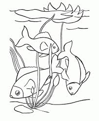the elegant in addition to interesting printable fish coloring