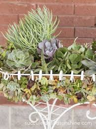 planter for succulents wire planter filled with succulents succulents and sunshine