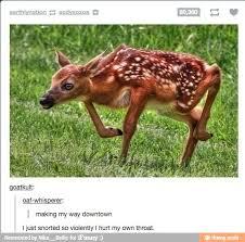 Oh Deer Meme - oh deer meme by bertnast memedroid