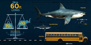 biggest megalodon shark megalodon size how big was the megalodon shark fossilera com