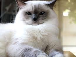 cat hd wallpaper 0341