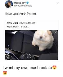 Mashed Potatoes Meme - ducky boy i love you mash potato aww club meet mash potato i want my