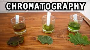 leaf color chromatography bite sci zed youtube