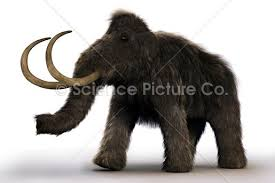 wooly mammoth spc id 5504 science 3d illustration