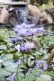 88 best ponds images on pinterest ponds alligator snapping