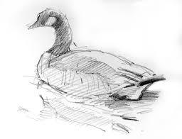 pictures sketching birds drawings art gallery