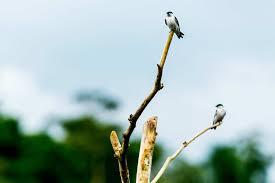 amazon rainforest native plants amazon rainforest canoe expedition amazon rainforest ecuador