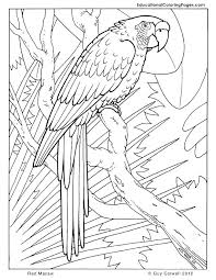 bird coloring pages for toddlers good jungle animal coloring pages for jungle animals coloring pages