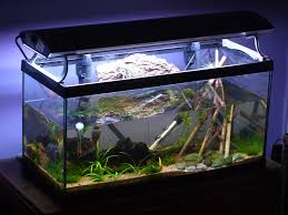 How To Clean Fish Tank Decorations Aquarium Safety And Potential Hazards