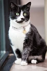 black friday pet adoption black friday black cat u003d priceless animal services municipal