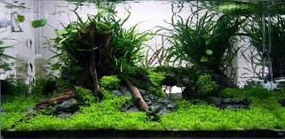 Green Machine Aquascape Get Excited And Make Something Aquascaping World Forum