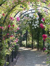 English Garden Pergola by Royal National Rose Society Gardens Wikipedia