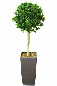 Artificial Topiaries - uncategorized artificial topiary trees fiddle leaf tree 5m pot