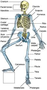 Anatomy Of The Calcaneus Posture Quiz Time What Are The