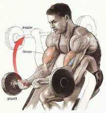 Body Solid Preacher Curl Bench Get Huge Biceps On The Preacher Bench Juicedmuscle Com