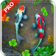 koi free live wallpaper apk free koi pond pro live wallpaper apk for android