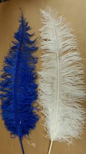 Where To Buy Ostrich Feathers For Centerpieces by Ostrich Feathers Ostrich Plumes Centerpieces Carnival