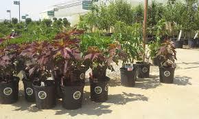 native plants for rain gardens central ohio rain garden initiative central ohio rain garden