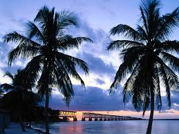 florida keys native plants florida beaches whether quiet and secluded or bustling with