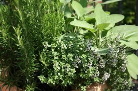 Window Box For Herbs Basil The Plant Farm