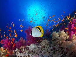 ocean life for grades 6 9 scholastic