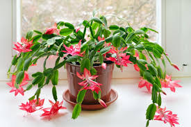 Plants To Keep In Bathroom How To Grow And Care For Air Plants Hgtv