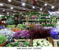 new covent garden flower market london stock photo royalty free